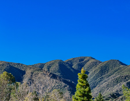 Pine tree and mountains are greeted by morning sun