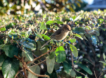 Small bird sits in the morning sun Imagens
