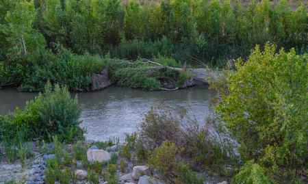 ツリーが川に落ちる
