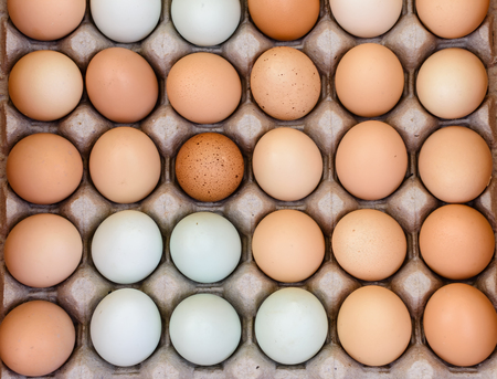 地元の農場からの新鮮な鶏の卵
