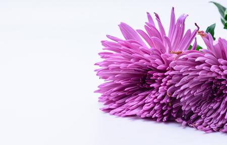 ホワイト スペースを持つユニークなピンクの花びら