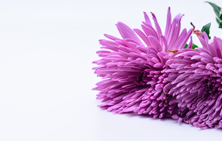 Unique pink petals with white space Stockfoto
