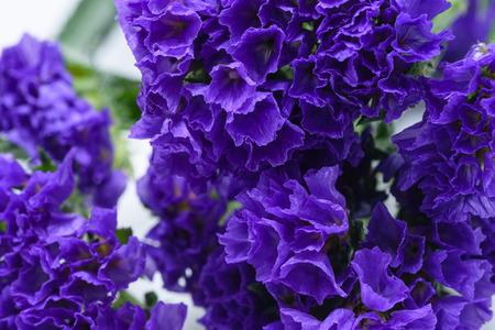 マクロ小さな紫色のカップ花 写真素材