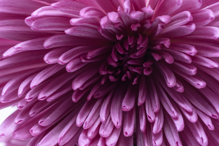 マクロ ピンク花