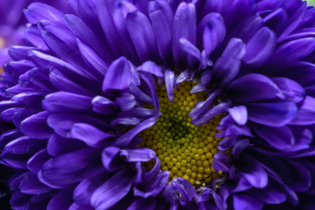 Macro purple and yellow flower Stockfoto