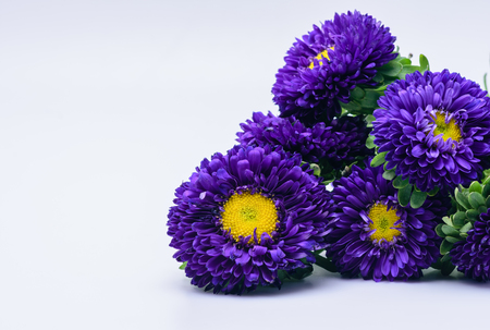 Purple and yellow flowers with space for copy text