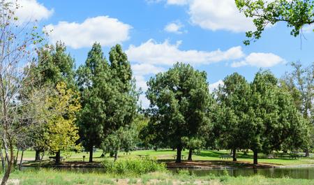 青い空と白い雲と松の木 写真素材