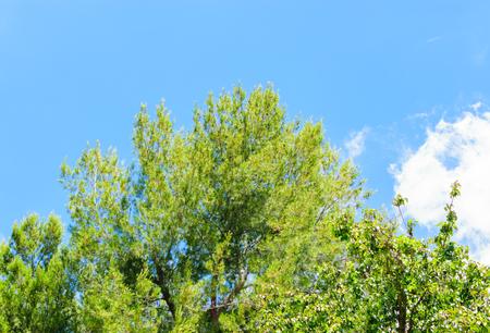 青空と風に公園の木 写真素材
