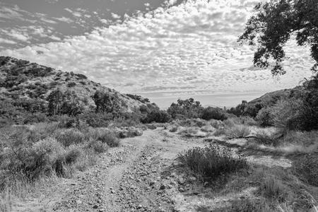 黒と白のダート林道 写真素材