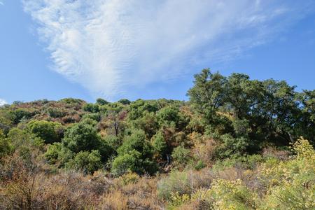 カリフォルニアの丘を登る 写真素材
