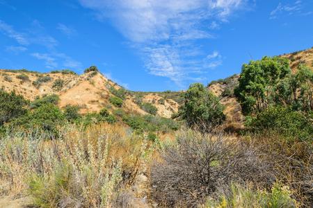 朝雲南カリフォルニア森林面積 写真素材