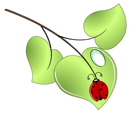 Lady bug on a green leaf - vector Vector