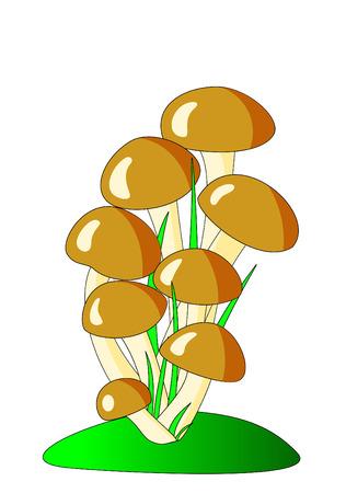 Brown mushrooms Vector