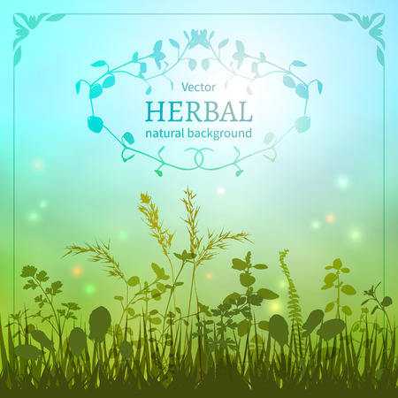 herbal: Delicate herbal background with a silhouette of grasses and fireflies bordered decorative floral border. Illustration
