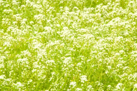 Meadow of wildflowers. Natural background of grass and wildflowers. photo