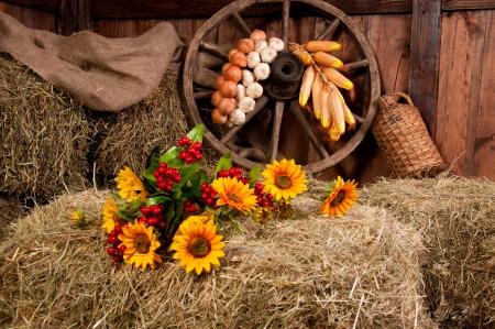 Interior of a rural farm - hay, wheel, garlic, onions, sunflowers  photo