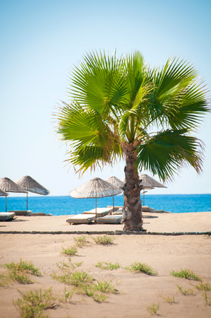 Sea resort, scenic sandy beach with palm trees photo