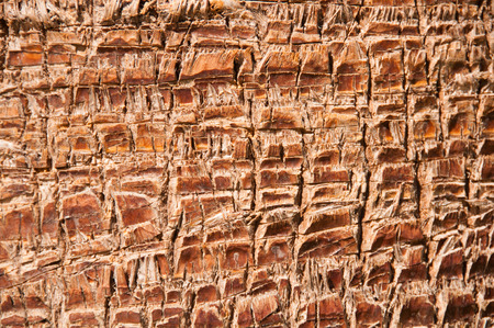 Close up of the bark of a palm tree, background texture pattern. photo