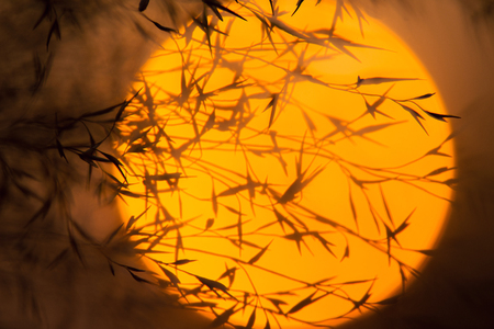 Dry branches against the evening sun. Branches of plants with leaves at sunset. Stock Photo