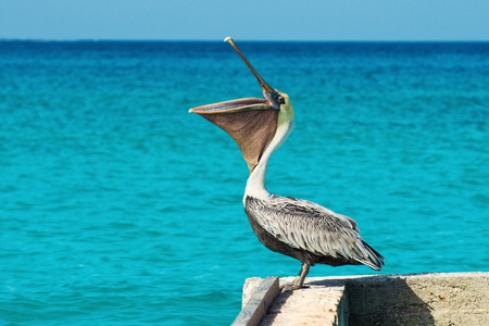 Pelican stands on a pier with a beautiful exotic blue sea. A tropical serene pier scene with the Caribbean Sea. Stock Photo