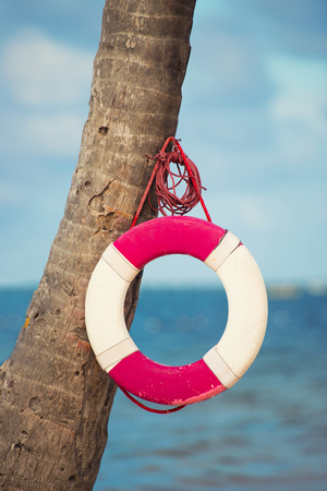 Lifebuoy hanging on a palm tree on the background of the sea. Stock Photo