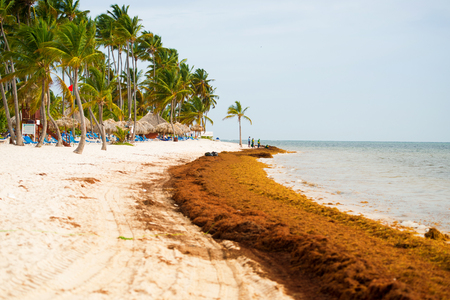 The coast of a beautiful beach is polluted with algae. Stock Photo