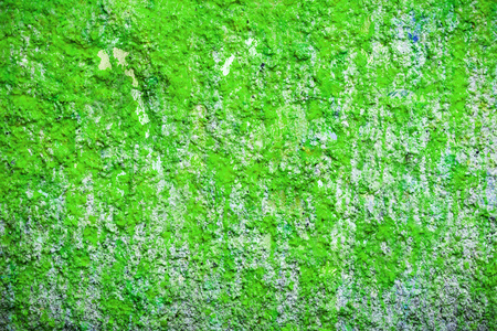 Background and wallpaper or texture green wall.