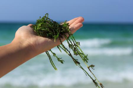 un puñado de algas frescas contra el fondo del mar