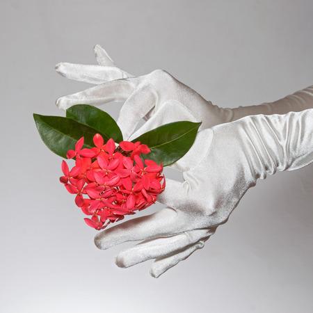 White elegant female gloves holding heart shaped flowers isolated on white background photo