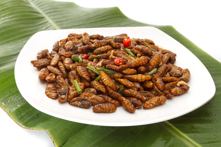 Fried edible larvae on white plate and green leaf