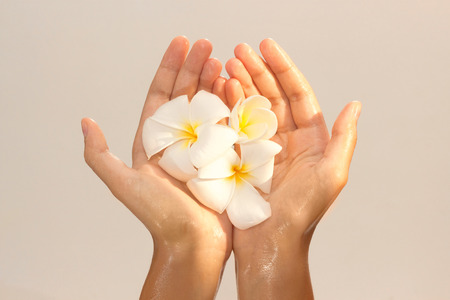 Golden tinted photo of female hands in oil holding magnolia flower on beige background view 8 Stock Photo