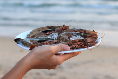 langoustine: Natural light photo with shallow DOF of female hand holding plate of raw langoustine on ice with sea view background
