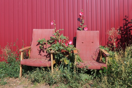 abandoned: Two old rusty empty red armchairs standing in flowers next to a metal red fence, horizontal view Stock Photo
