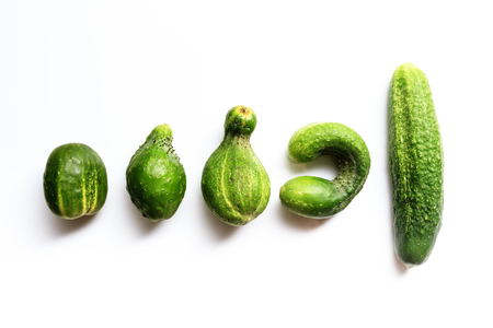 Different shape fresh cucumbers on white background. Horizontal view