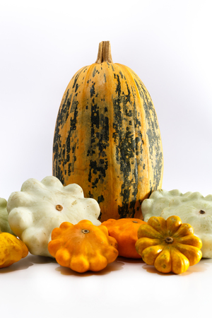 One big pumpkin and different bush pumpkins or marrow sqashes on white background. Autumn vegetables concept. Close up