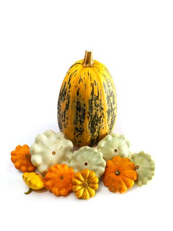 One big pumpkin and different bush pumpkins or marrow sqashes on white background. Autumn vegetables concept.