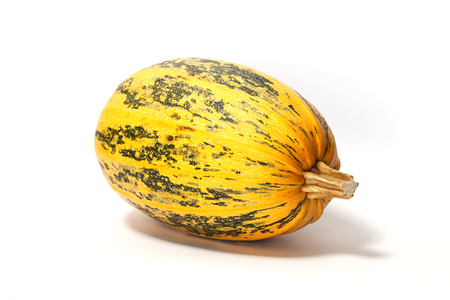 One big spotted pumpkin on white background. Autumn vegetables concept. Close up, horizontal view