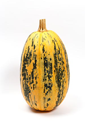One big spotted pumpkin on white background. Autumn vegetables concept. Close up