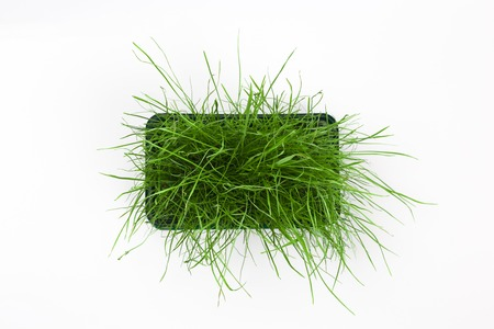 Bright green fresh grass sprouted in a plastic box on a white background. Horizontal top view with copy space Reklamní fotografie