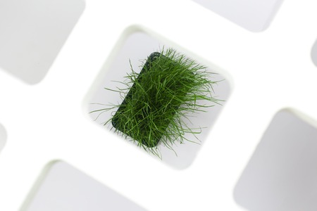 Bright green fresh grass sprouted in a plastic box on a white background. Horizontal top view