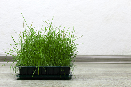 Bright green fresh grass sprouted in a plastic box on a wooden background. Horizontal view with copy space