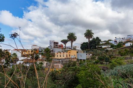 Aincient Dragon Tree in ICOD de los Vinos, Tenerife Reklamní fotografie