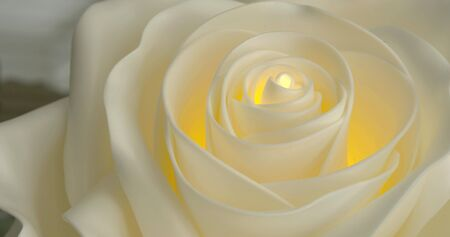 beautiful artificial white rose in room, close-up moving shot