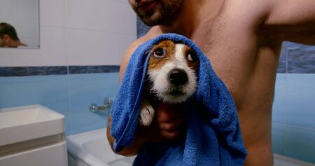 close-up portrait of a dog wet after washing. the owner holds in his hands in a towel and wipes