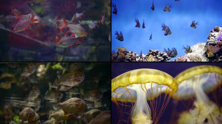 Multi-shot close-up of the beautiful underwater world. Fish, jellyfish, corals, reefs, algae. Beautiful blue sea bottom
