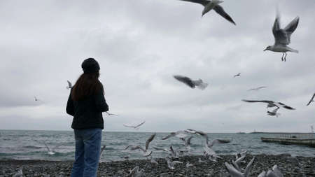 woman is feeding seagulls on sea shore at cold weather, winter or fall on seacoast