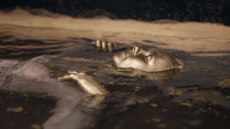 mysterious woman with golden skin in water, closed eyes, ancient goddess, artistic shot Standard-Bild
