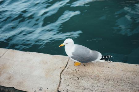 Flying gull in Milan, Italy