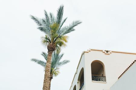 Branches of coconut palms under blue sky Foto de archivo - 124939576