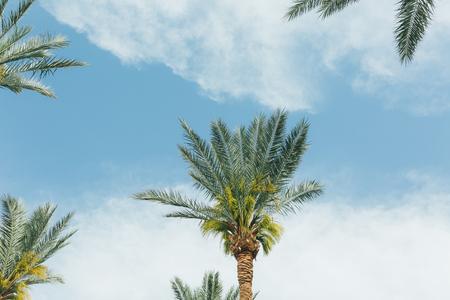 Branches of coconut palms under blue sky Foto de archivo - 124939577